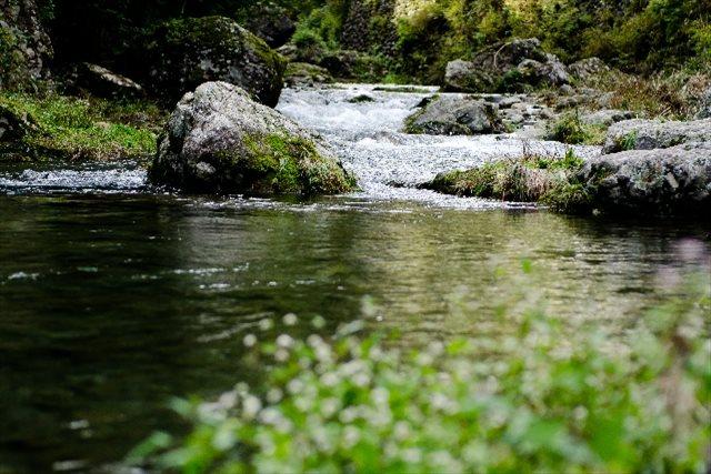 魚沼産のコシヒカリがおいしいのはなぜ?お米を作るのに適した環境や条件