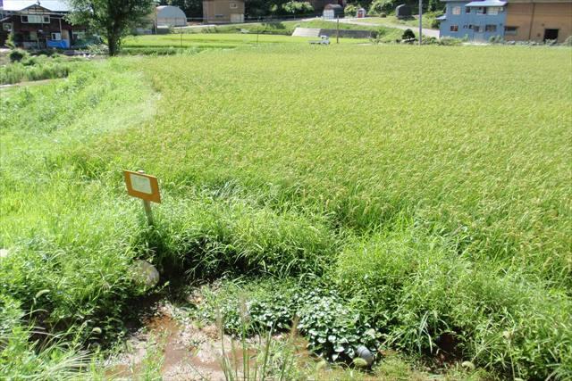意外と知らない!?有機栽培と無農薬栽培の違い