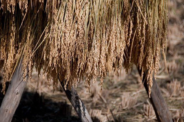 オーガニックのお米は新潟産のお米を取り扱う【あふあふ倶楽部】の通販から